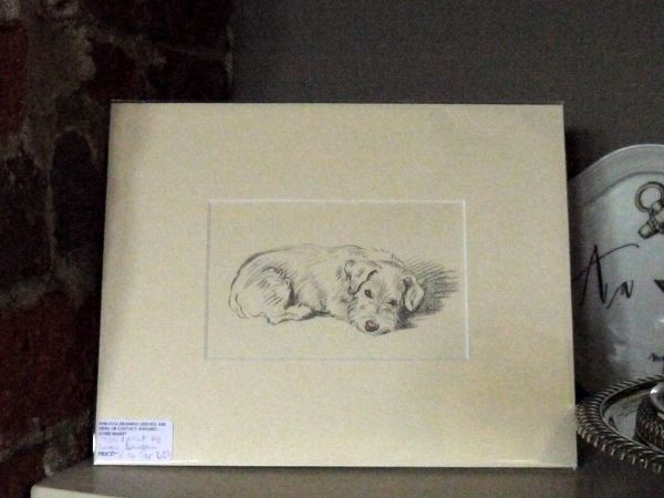Little Terrier - curled up , looking out 1930's print by Lucy Dawson - Ter D37